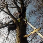 Montage antenne Windom ON4CN